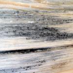 древесная синева